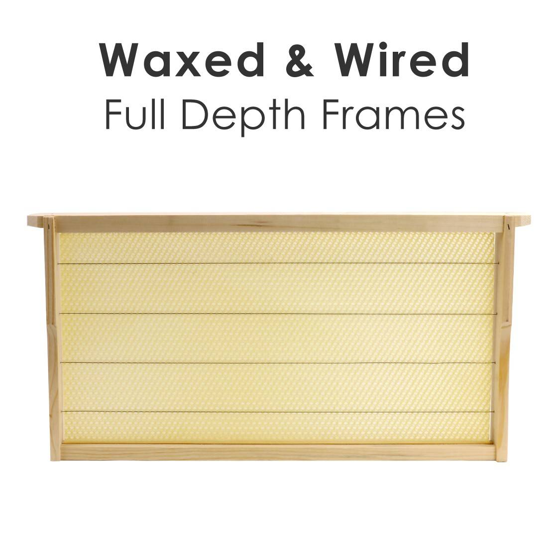 Full Depth Frames - Fully assembled, wired & Wax inserted - High Quality Russian Pine Frames