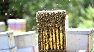 Australian Bee Congress: A buzz for bees